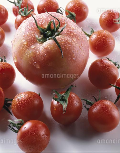 トマトとプチトマトの写真素材 [FYI03904759]