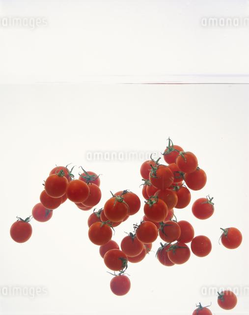 プチトマトの写真素材 [FYI03904760]