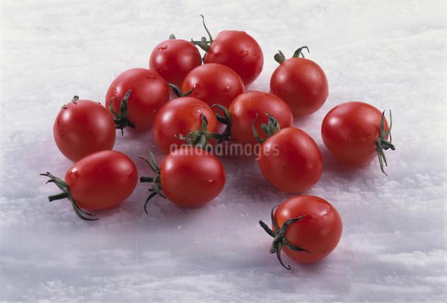 プチトマトの写真素材 [FYI03904765]