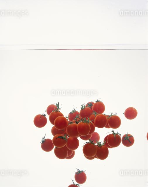 プチトマトの写真素材 [FYI03904772]