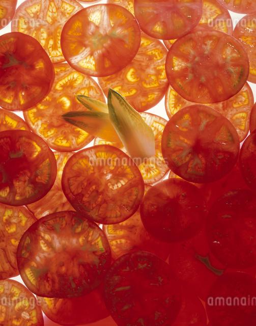 トマトの写真素材 [FYI03904801]