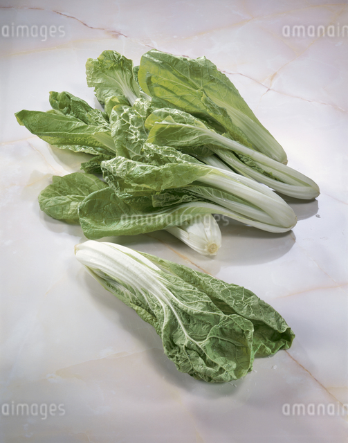 広東白菜の写真素材 [FYI03904808]