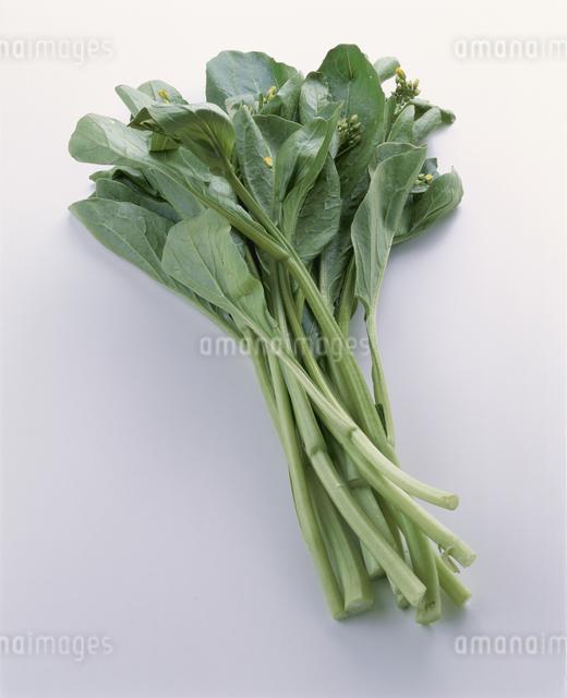 油菜苔の写真素材 [FYI03904822]