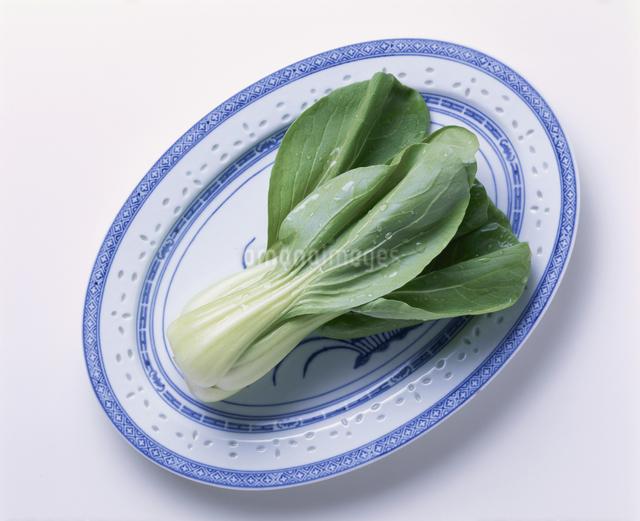 チンゲン菜の写真素材 [FYI03904937]