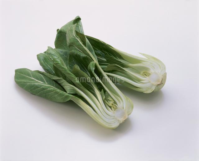 チンゲン菜の写真素材 [FYI03904965]
