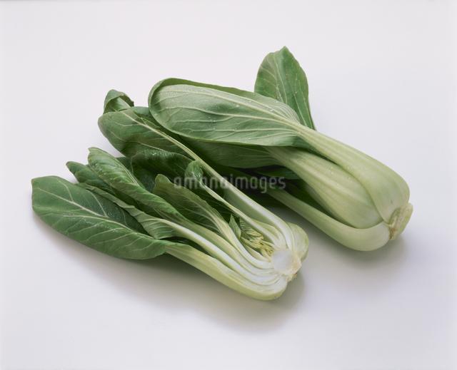 チンゲン菜の写真素材 [FYI03904972]