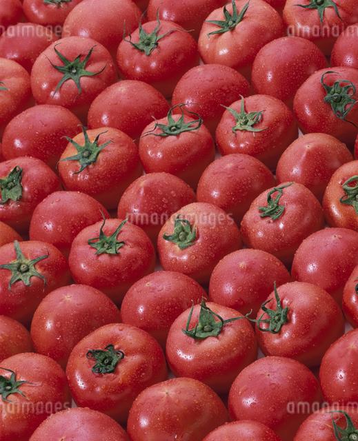 トマトの写真素材 [FYI03904975]