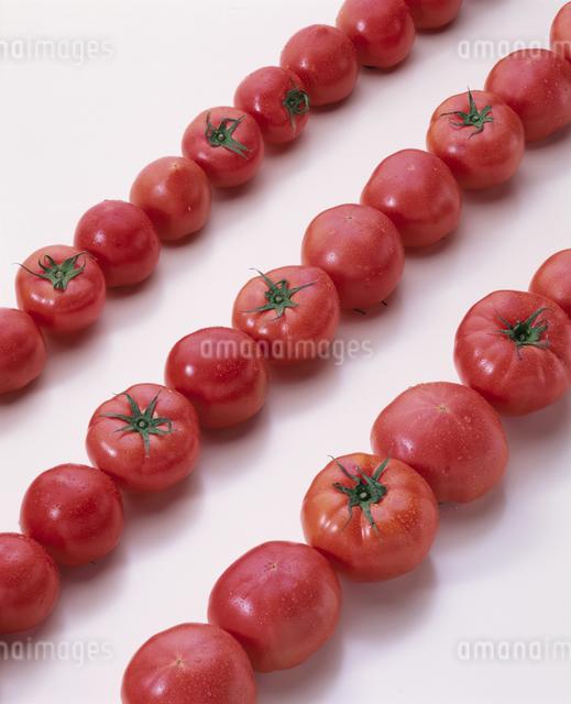 トマトの写真素材 [FYI03904977]