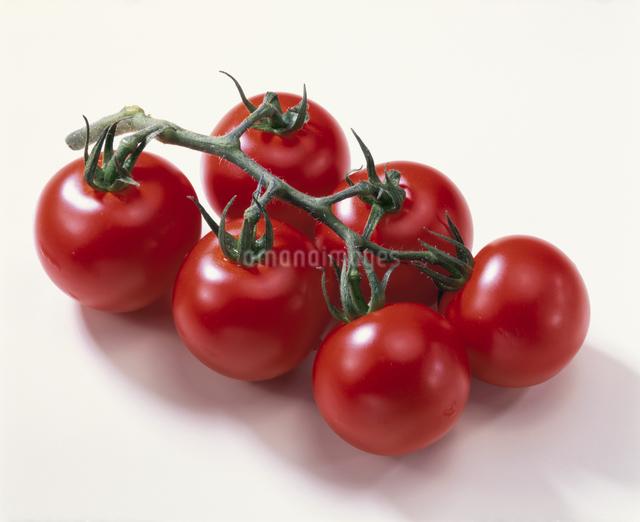 プチトマトの写真素材 [FYI03905016]