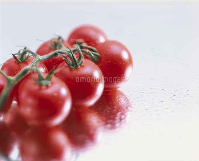プチトマトの写真素材 [FYI03905017]