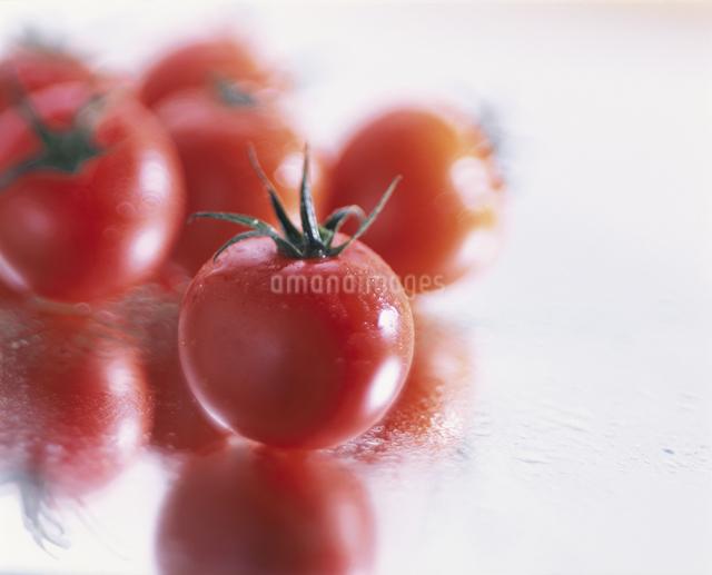 プチトマトの写真素材 [FYI03905020]