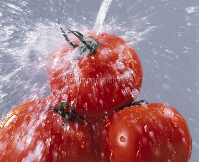 トマトの写真素材 [FYI03905085]