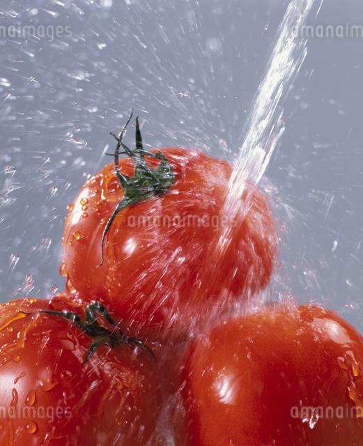 トマトの写真素材 [FYI03905086]