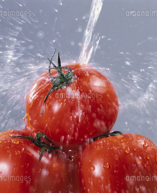 トマトの写真素材 [FYI03905087]