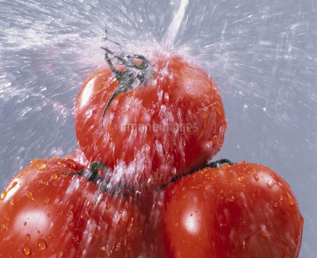 トマトの写真素材 [FYI03905088]
