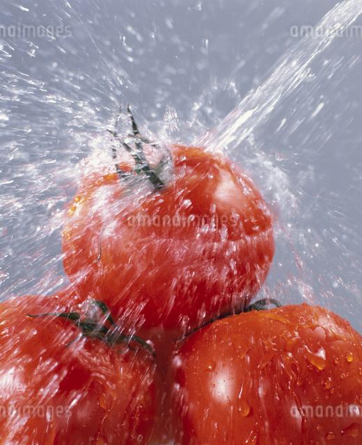 トマトの写真素材 [FYI03905092]