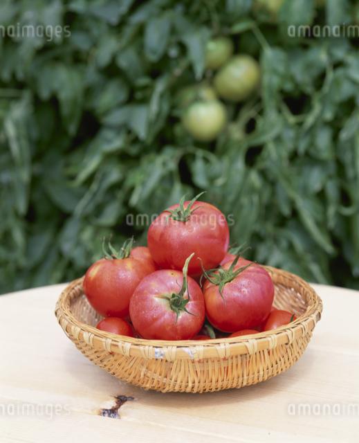 トマト(レッドパール)の写真素材 [FYI03905093]