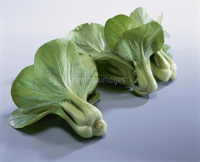 チンゲン菜の写真素材 [FYI03905115]