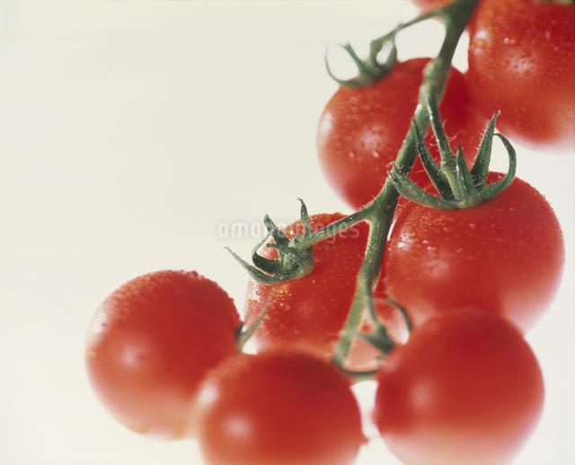 プチトマトの写真素材 [FYI03905152]