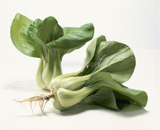 チンゲン菜の写真素材 [FYI03905163]