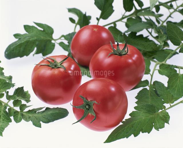 トマトの写真素材 [FYI03905217]
