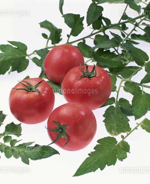 トマトの写真素材 [FYI03905219]