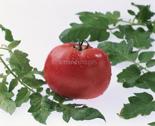 トマトの写真素材 [FYI03905227]
