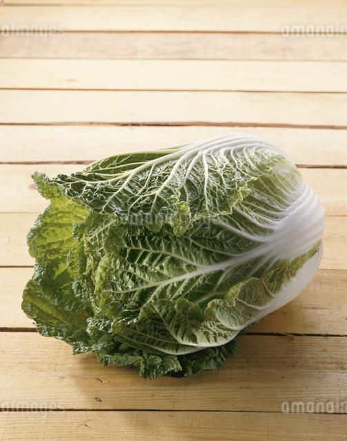 白菜の写真素材 [FYI03905274]