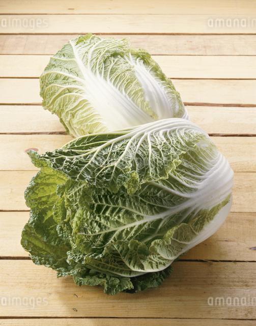 白菜の写真素材 [FYI03905280]