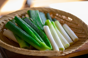 Japanese fresh green scallion.の写真素材 [FYI03905580]