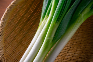 Japanese fresh green scallion.の写真素材 [FYI03908355]