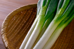 Japanese fresh green scallion.の写真素材 [FYI03908485]