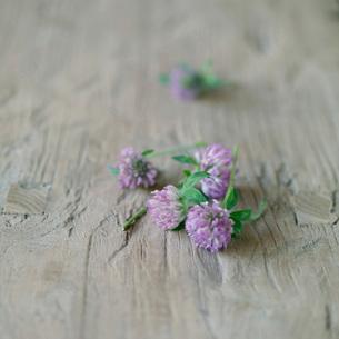 テーブルに置かれた野花の写真素材 [FYI03911372]