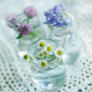 摘んできた3種類の野花の写真素材 [FYI03911392]