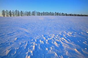 2月 帯広の防雪林の写真素材 [FYI03911461]