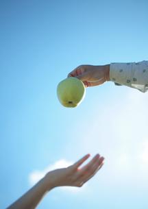 リンゴの受け渡しをする女性の手元の写真素材 [FYI03911485]