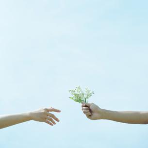 野花を受け渡すカップルの手元の写真素材 [FYI03911627]
