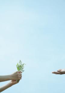野花を受け渡すカップルの手元の写真素材 [FYI03911629]