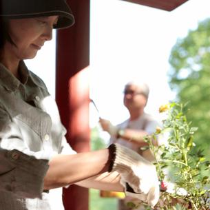 花を植える中高年女性の写真素材 [FYI03911786]