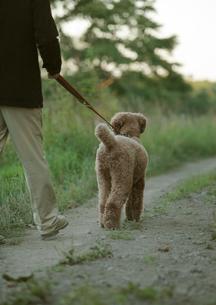 田舎道を散歩する中高年男性と犬の写真素材 [FYI03911827]