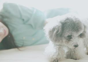 横になって子犬を見つめる女性の写真素材 [FYI03912659]