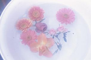白平バケツに浮かんだピンクガーベラ・バラ等の写真素材 [FYI03913401]