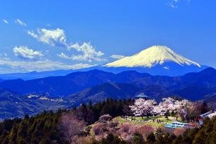 菜の花台 富士山と桜の写真素材 [FYI03913422]