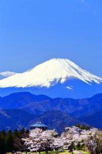 菜の花台 富士山と桜の写真素材 [FYI03913425]