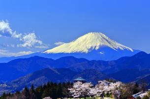 菜の花台 富士山と桜の写真素材 [FYI03913427]