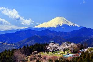 菜の花台 富士山と桜の写真素材 [FYI03913432]