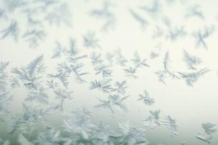 ガラスに付着した氷の結晶の写真素材 [FYI03913450]