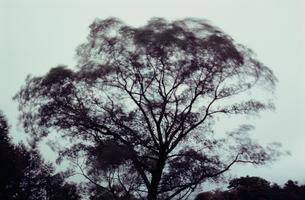 風に揺れる秋の木立の写真素材 [FYI03913559]