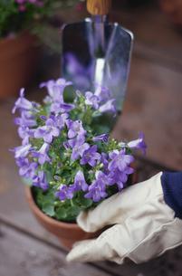 花の植替えの写真素材 [FYI03913626]