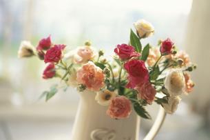 白水差しに生けた赤バラ・ピンクカーネーション等の写真素材 [FYI03913656]